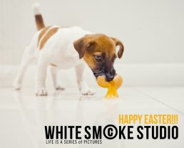 jack russell terrier eating raw egg