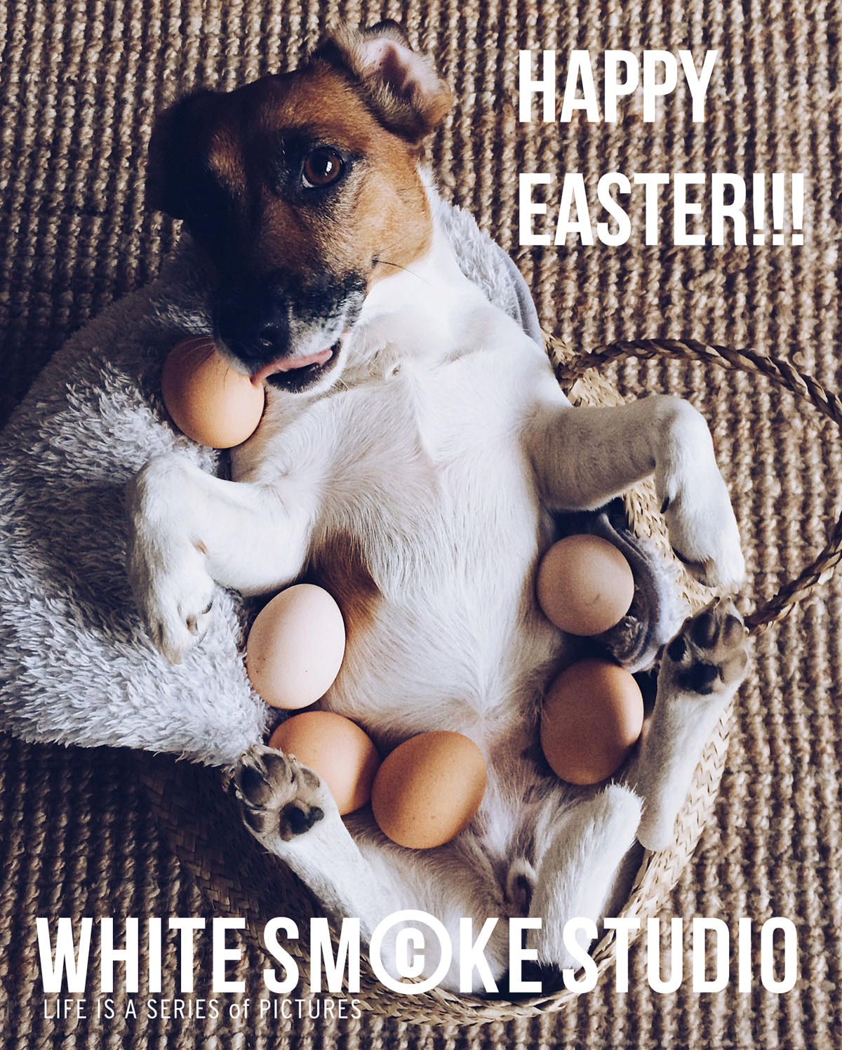 HAPPY EASTER ale jaja jack russell terrier